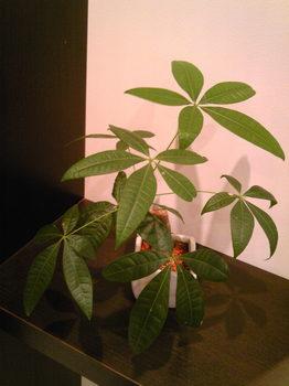 IORI観葉植物.jpg